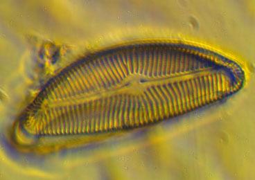 Hydrobiologie - Détermination des indices biologiques en Bretagne - ICEMA