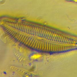 Laboratoire de biologie des milieux aquatiques